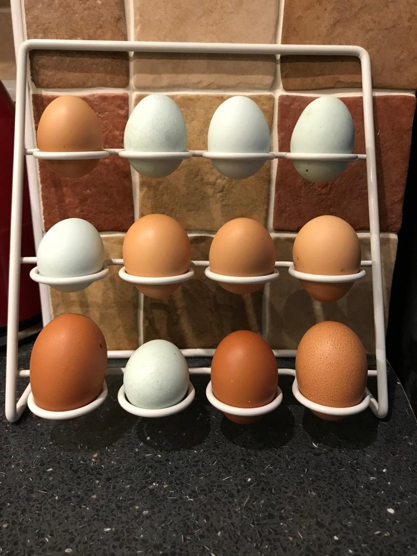 Three distinct egg colours!