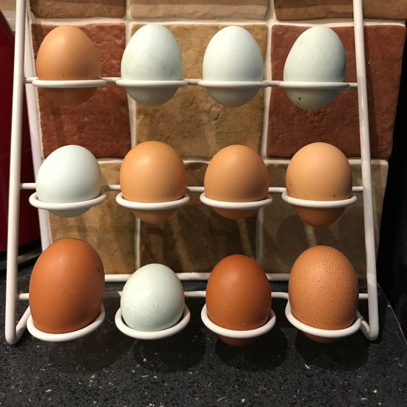 Three distinct egg colours!